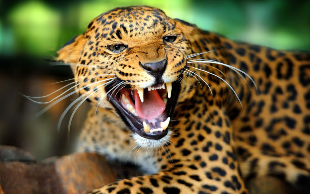 Ecosystem-Restoration-Panama-Jaguar-Falls-Video
